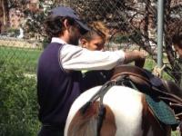 Treball amb cavalls a Can Miralpeix